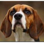 hundehaftpflicht450x300-300x200